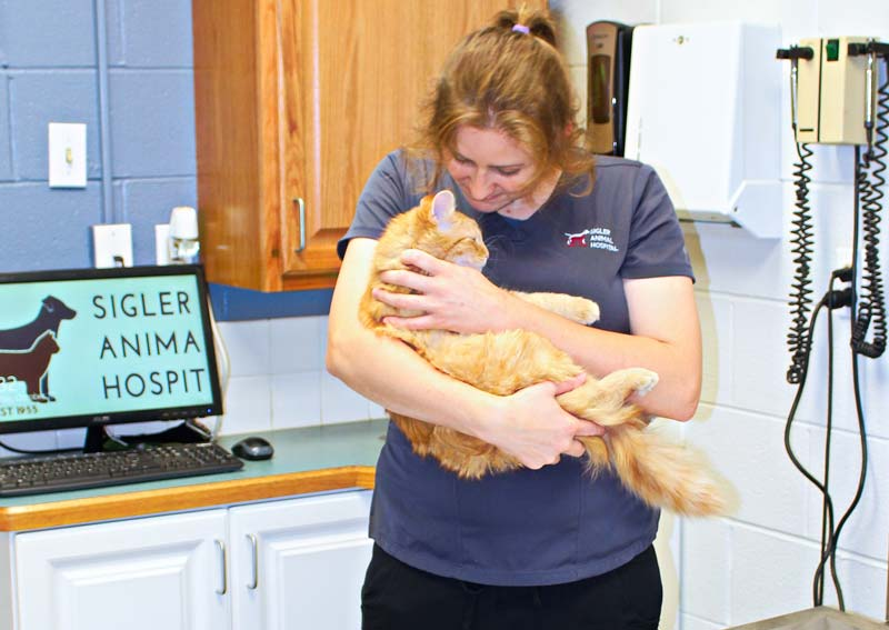 Cat Veterinary Care, Akron OH